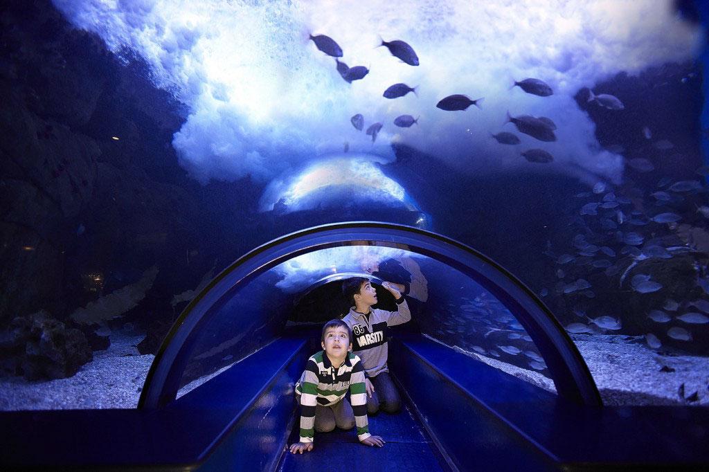 Valencia spain oceanographic aquarium Entradas aquarium valencia